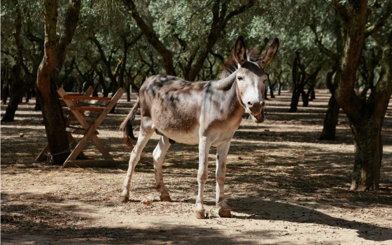 La Fattoria_Donkey