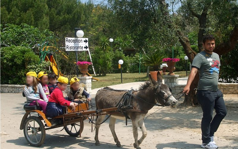 Tour on the Donkey Pinuccio