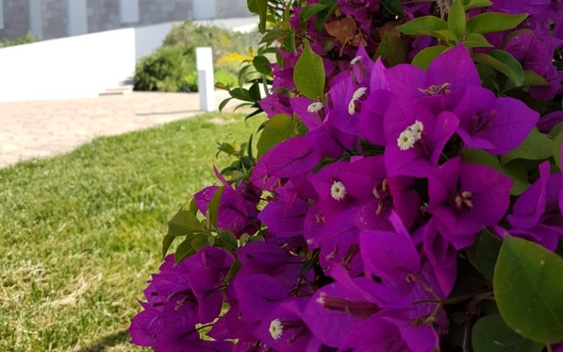 outdoor_vegetation